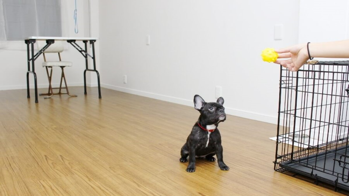 Dog Salon, Hotel Mili Mili