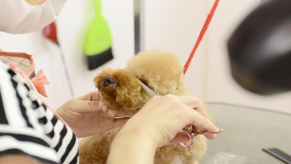 Dog salon pirica(ドッグサロン ピリカ)