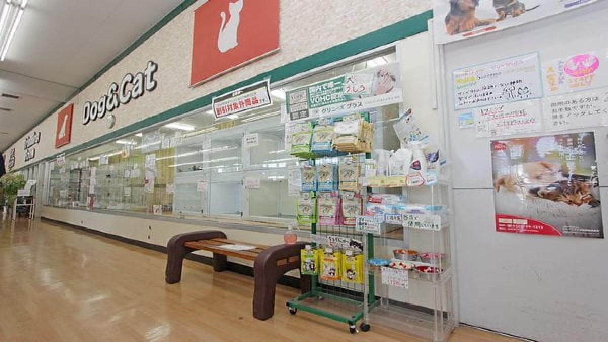 ペットショップノア 相模原橋本店