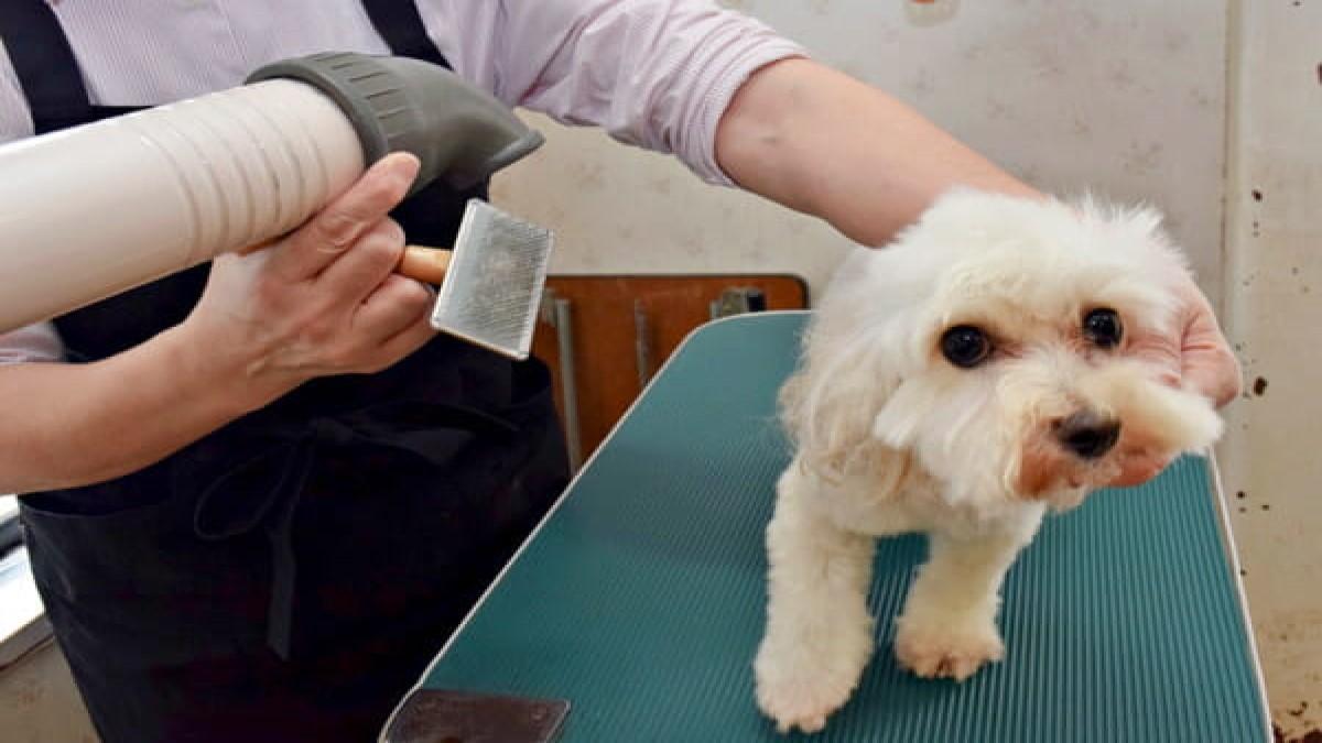 小型犬専門ショップVivien