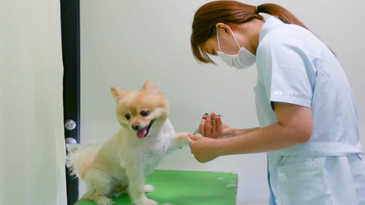本田動物病院