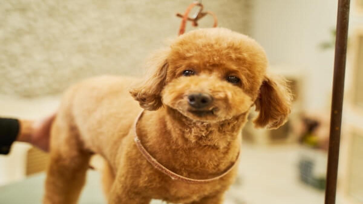 Dog サロン Qoo 泉佐野店(ホテル)