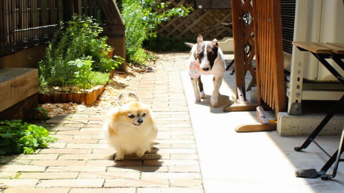 ken.ken.pa grooming garden terrace