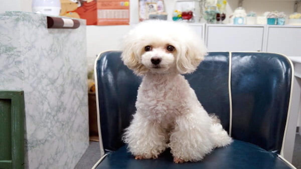 PetSalon Dog's Way 淀川店