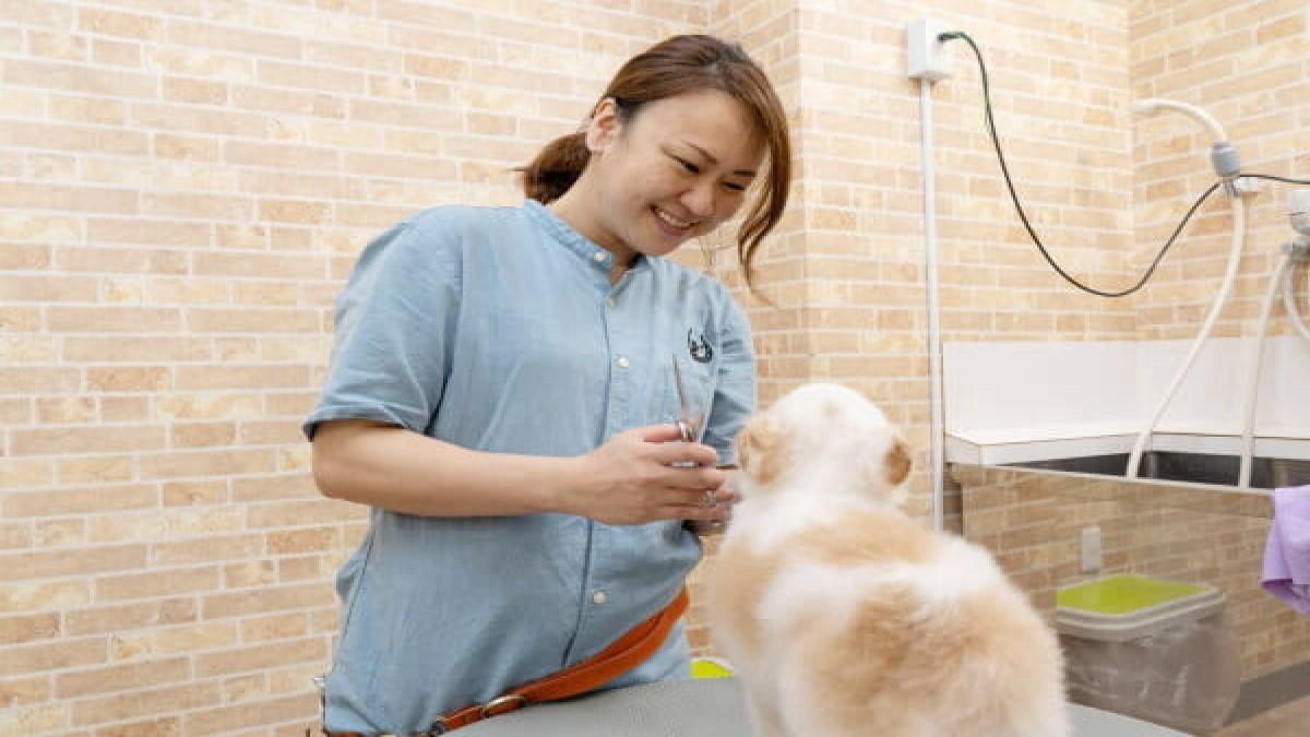 Dog Salon & Horse Supplies LinoLani