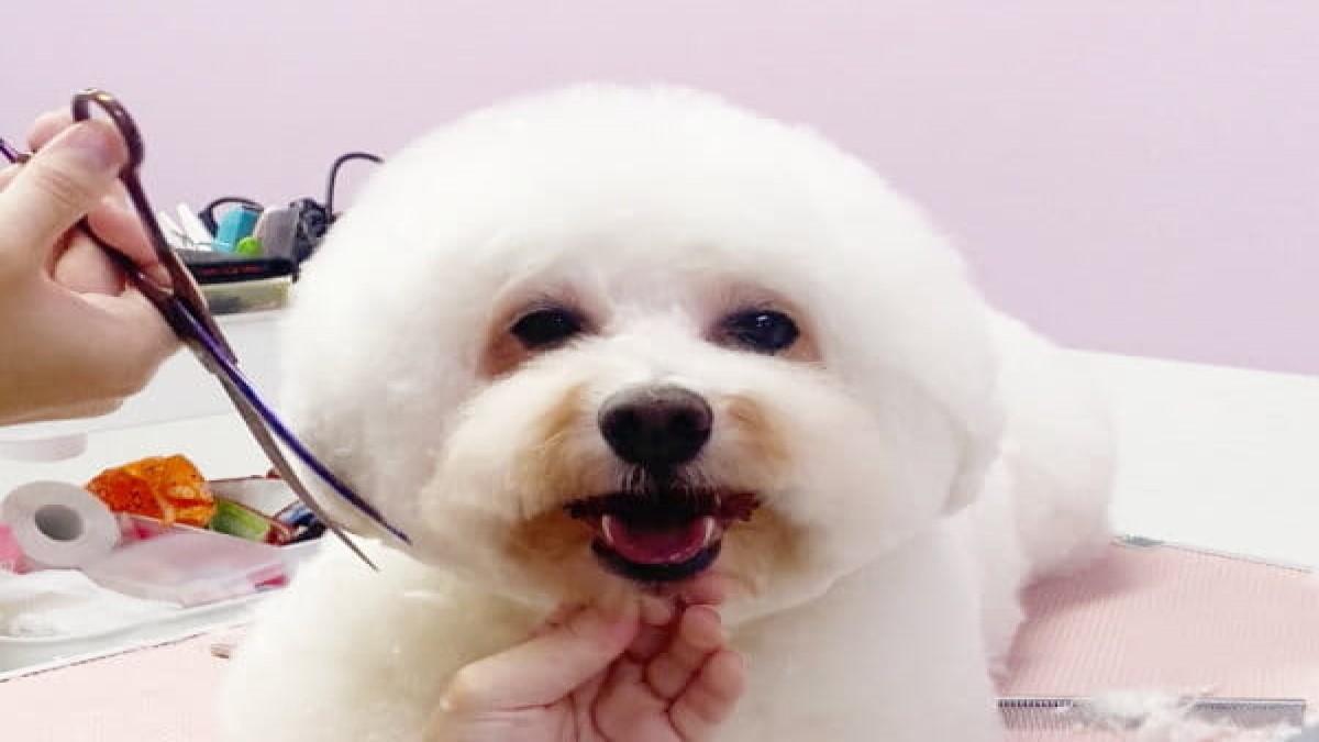 Dog Salon BOB