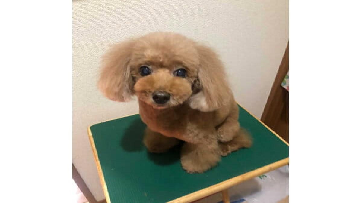 出張トリミング Lupinus Dog(愛知・東京・埼玉)