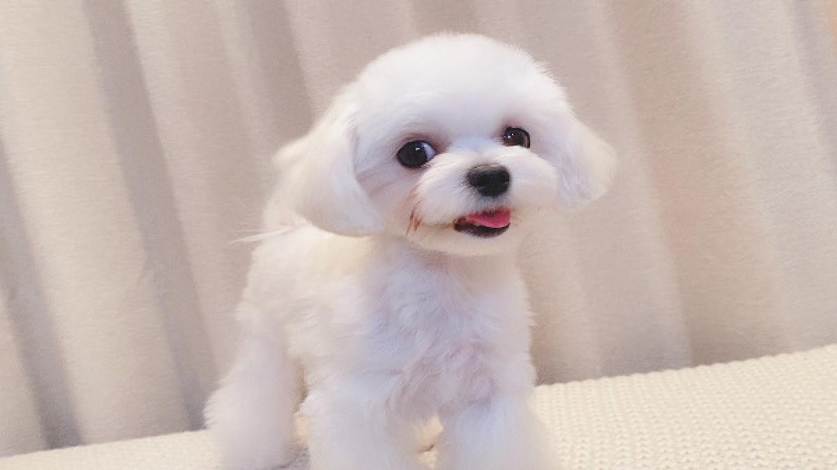 Dog Salon LuLu