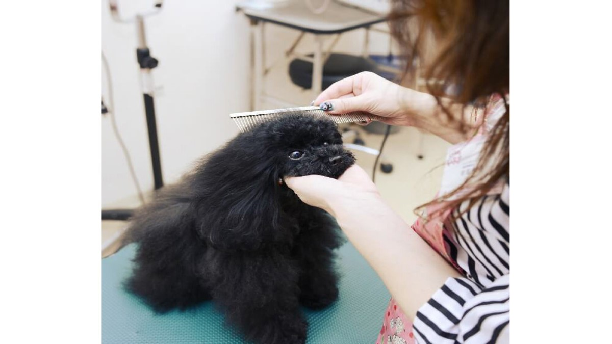 犬の美容室 いちご 中川本店
