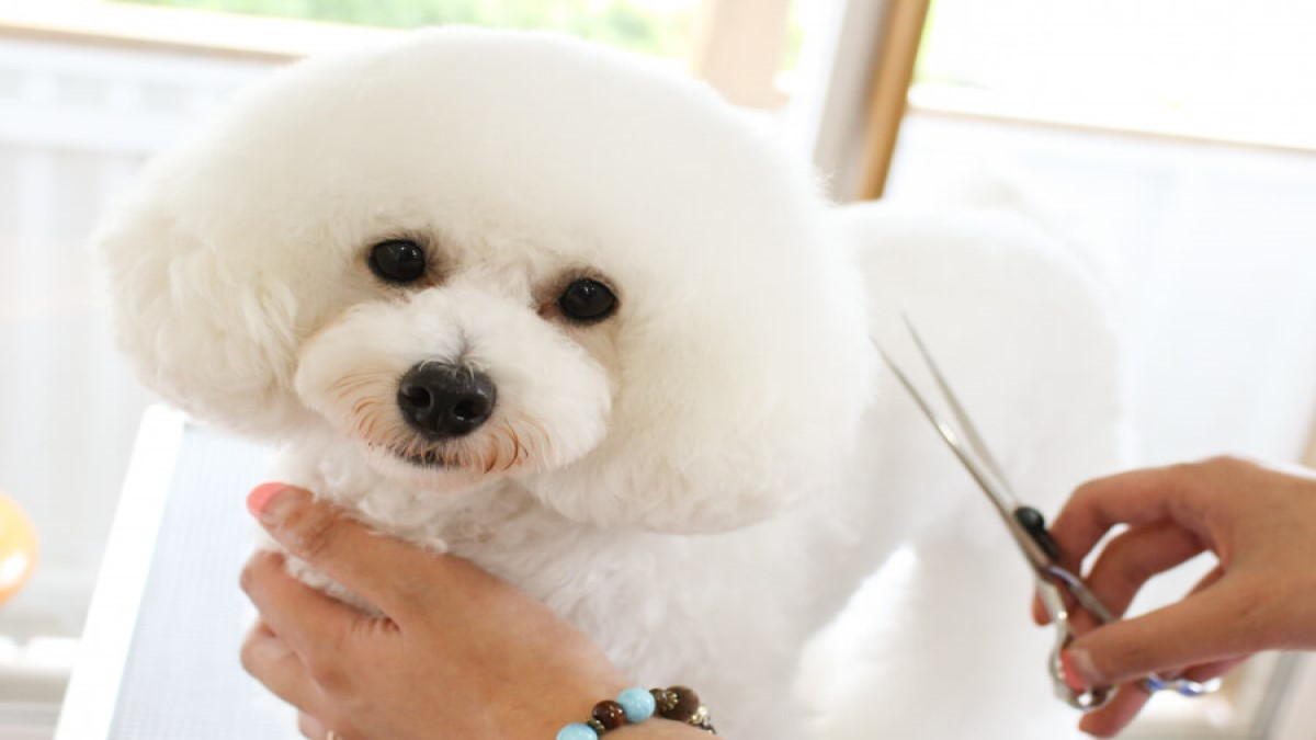 犬の美容室 COWAN