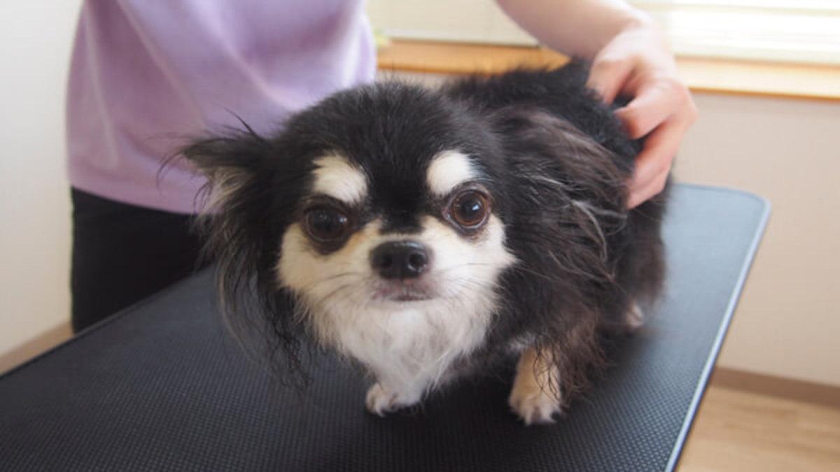 Dog salon CLOVERS