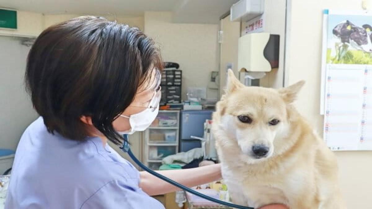 犬猫の病院・ピュア