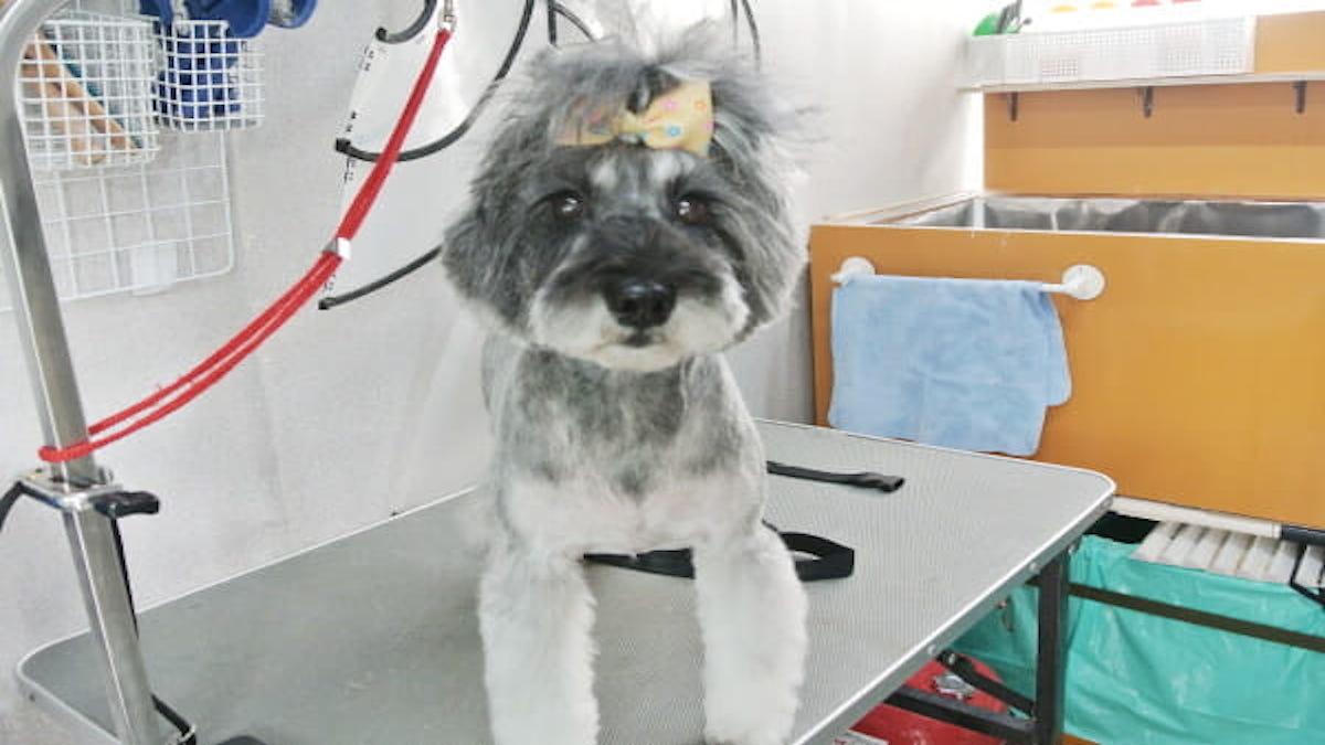 トリミング ケアサロン Lovely Dog(出張専門)