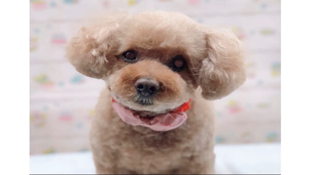 愛犬の美容室 トムボーイ