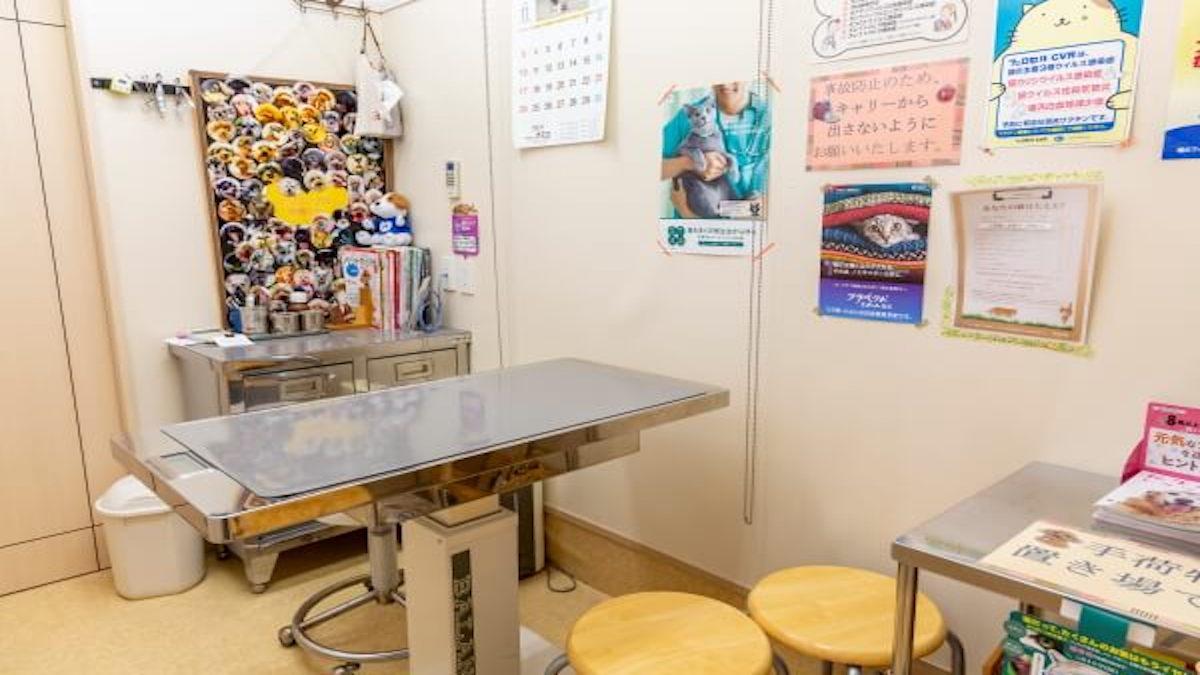 ひまわり動物病院(トリミング)