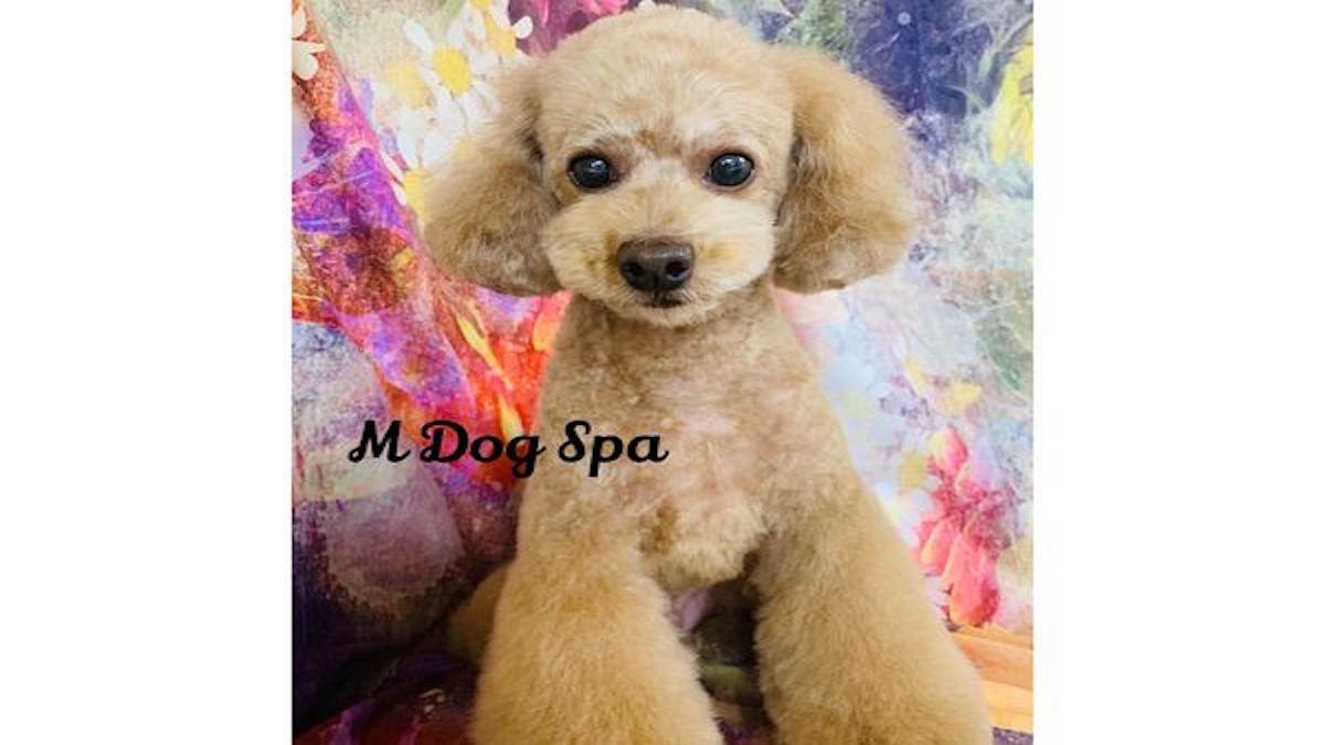 M Dog Spa