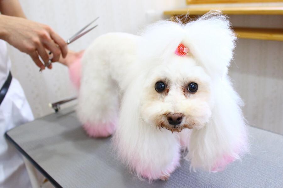 Pet Salon MocoMoco