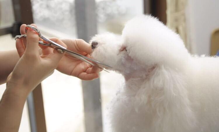 dog styling salon Day's