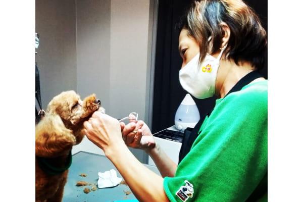 Mammy's dog salon