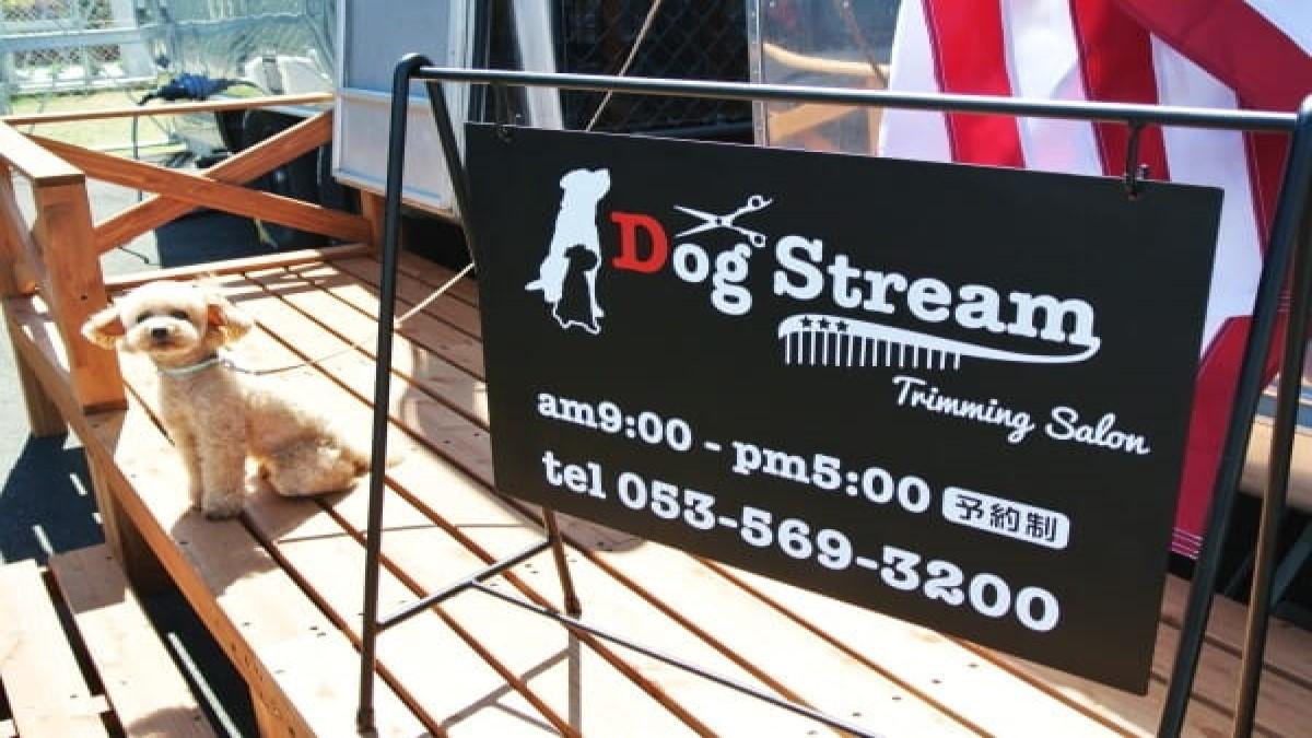 Dog Stream