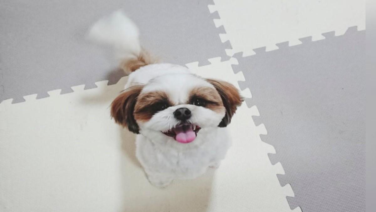 Dogsalon FuWaRi