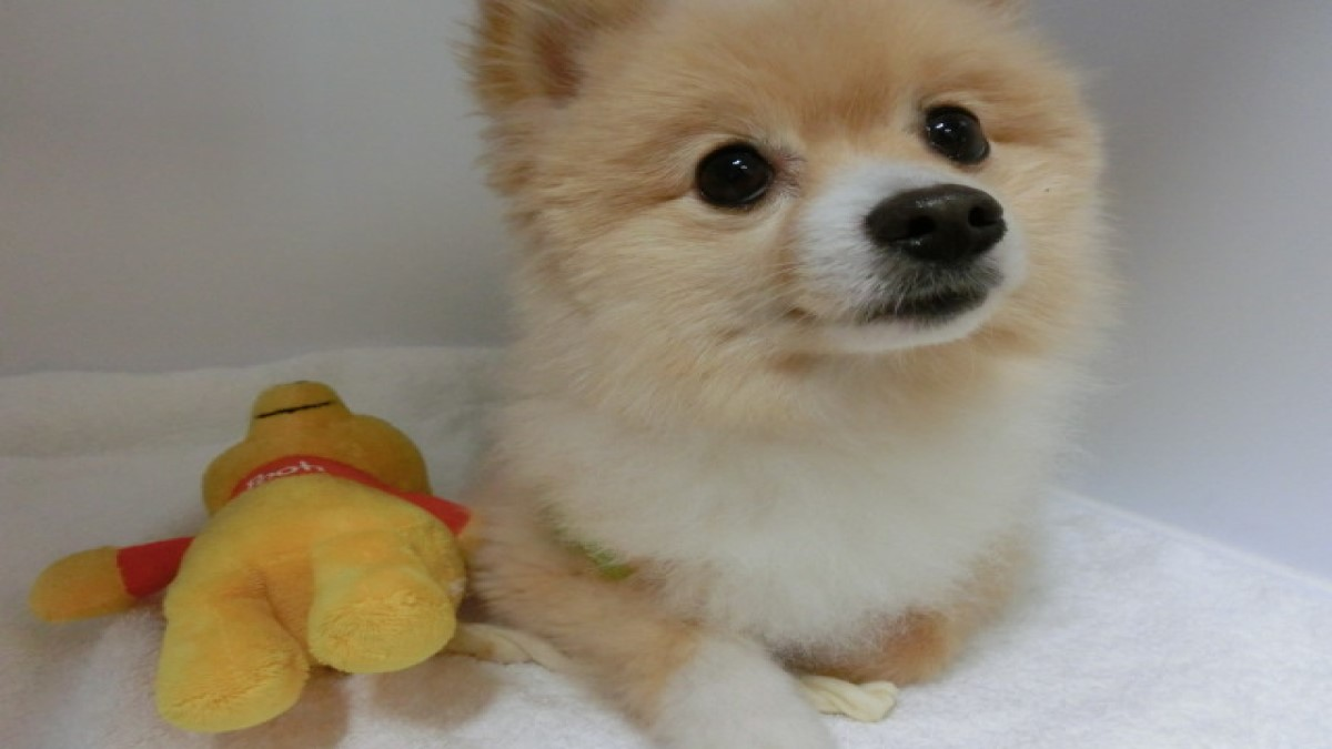 Dog Salon LEAD