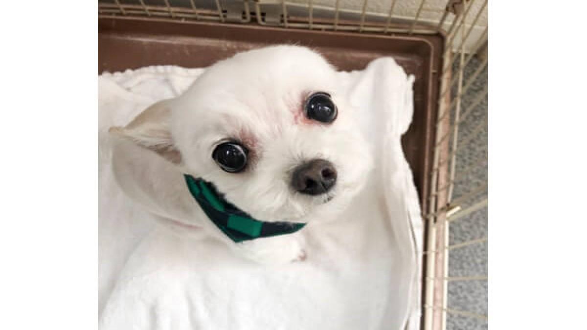愛犬の美容室ホテル パピー