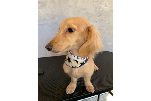 Dog salon cyoko